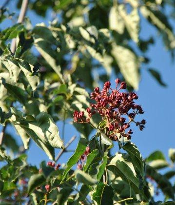 Bomen Voor Bijen 4