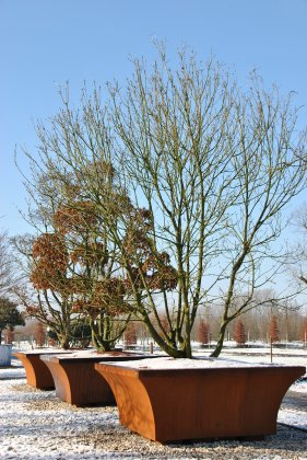 Winterbeeld boom in boombak