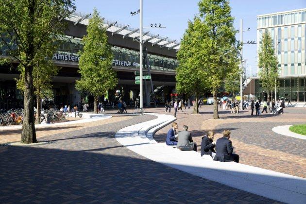 Amsterdam Arena Metasequoia Glyptostroboides 1