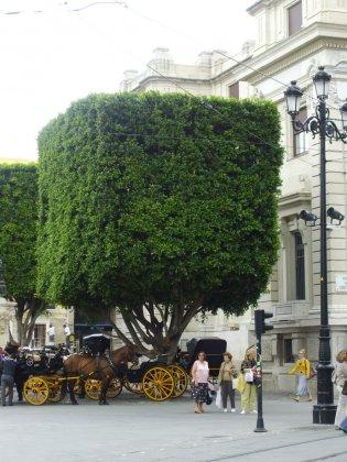 Bomen Voor De Toekomst 2